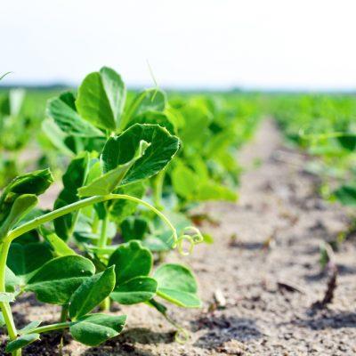 Los beneficios de la aplicación del ozono en la agricultura